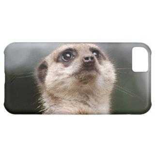 Meerkat iPhone 5C Hülle