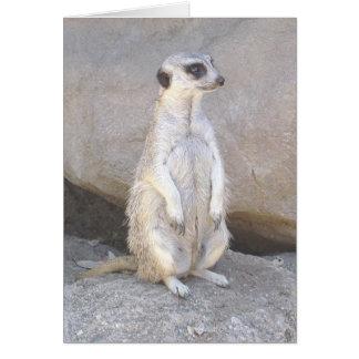 meerkat Karte