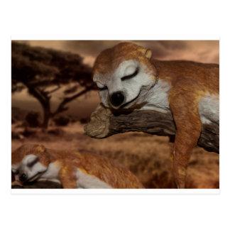 meerkat postkarten
