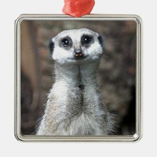 Meerkat Quadratisches Silberfarbenes Ornament