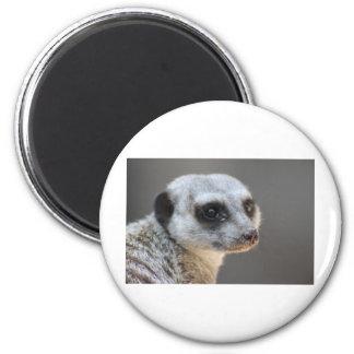 Meerkat Runder Magnet 5,7 Cm