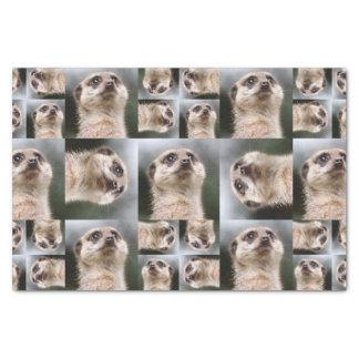 Meerkat Seidenpapier