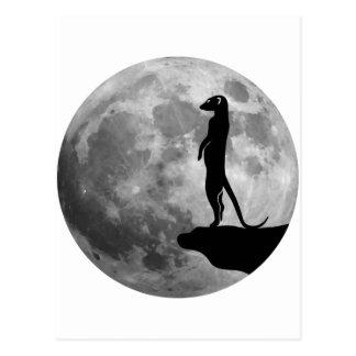 meerkat suricat erdmännchen mond Mond Postkarte