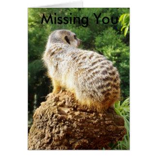 Meerkat vermisst Sie, Karte