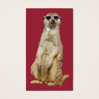 Meerkat Visitenkarten