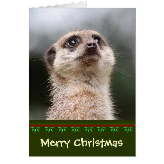 Meerkat Weihnachtskarte Karte