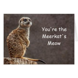 Meerkats Meow-Geburtstags-Karte Karte