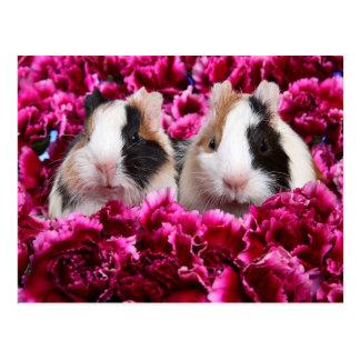 Meerschweinchen im Blumen-Bett Postkarte
