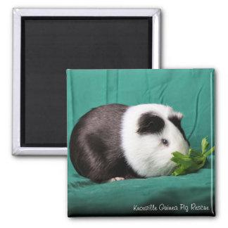 Meerschweinchen-Kühlschrank-/Schließfach-Magneten Quadratischer Magnet