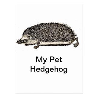 Mein Haustier-Igel Postkarte