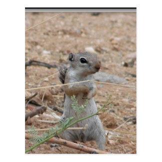 Mein Hinterhof-Grundeichhörnchen Postkarte