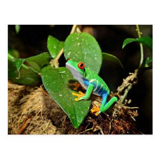Meistgekaufter Frosch themenorientiert Postkarte