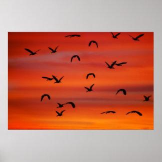 Menge von Fliegen Gänsen Poster