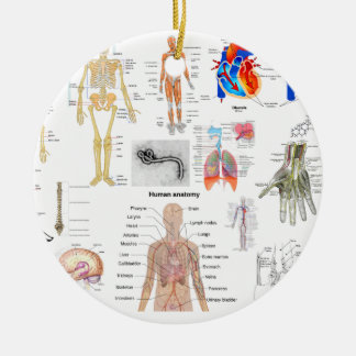 Menschliche Anatomie-medizinische Diagramme voll Keramik Ornament