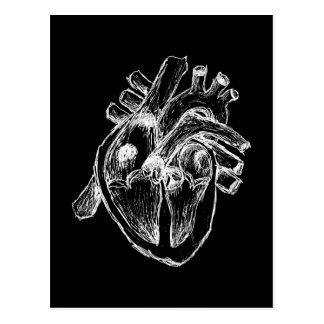 Menschliches Herz Postkarte