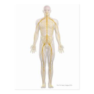Menschliches Nervensystem 2 Postkarte