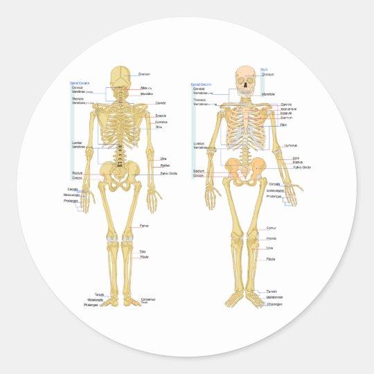 Menschliches Skelett beschriftet Anatomiediagramm Runder Aufkleber ...