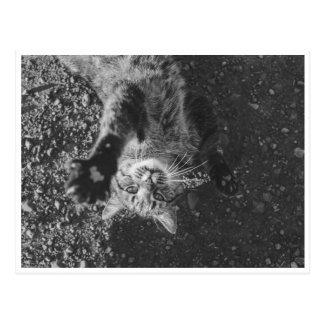 Meow Postkarte