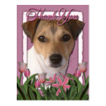 Merci - tulipes roses - Jack Russell Cartes Postales