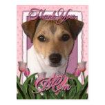 Merci - tulipes roses - Jack Russell Carte Postale