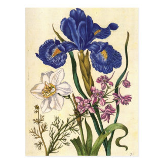 Merian Blumenkunst-Postkarte Postkarte