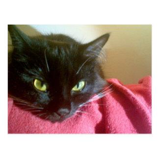 MERLIN die Katzen-Postkarte Postkarten