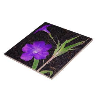 Mexikanische Petunie lila Große Quadratische Fliese