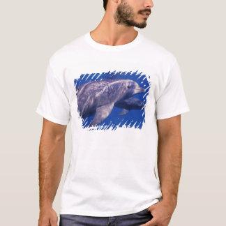Mexiko, Cozumel. Bottlenosed Delphin, Tursiops 2 T-Shirt