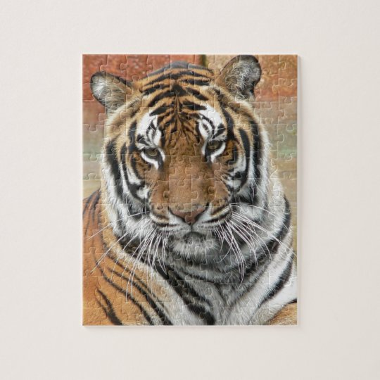 Mieten Tigres in der Betrachtung