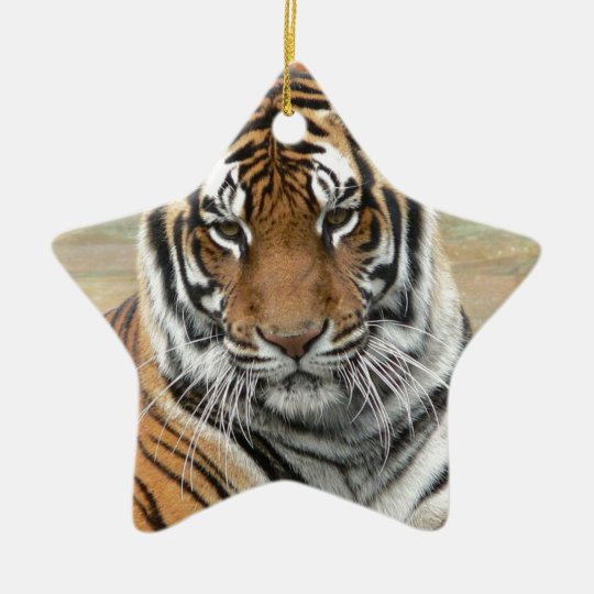Mieten Tigres in der Betrachtung Keramik Stern-Ornament