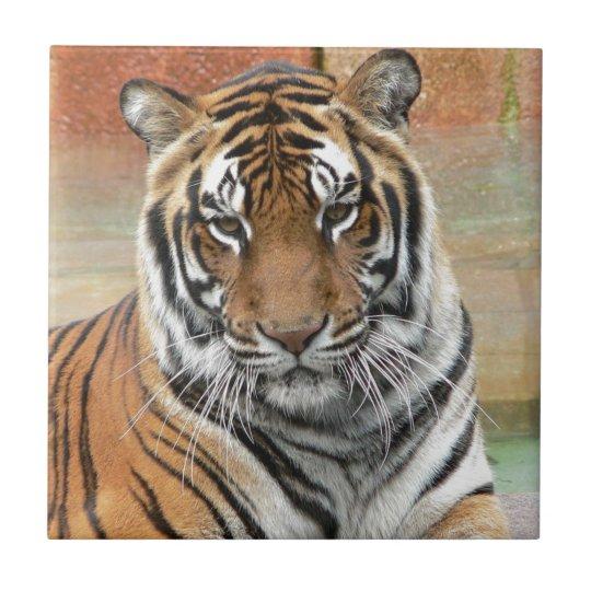 Mieten Tigres in der Betrachtung Kleine Quadratische Fliese