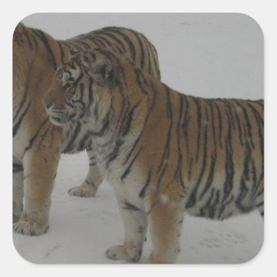 Mieten zwei sibirische Tiger Quadratischer Aufkleber