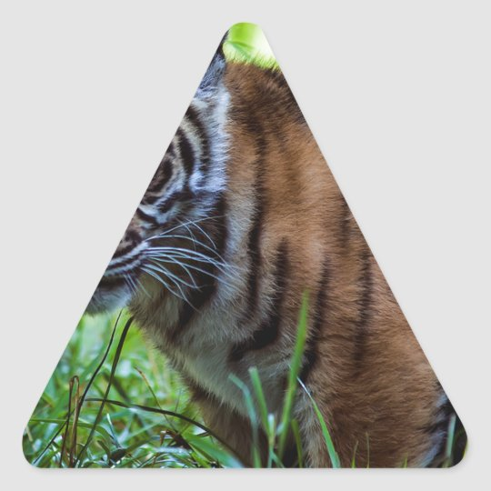 MieteSumatran Tiger CUB Dreieckiger Aufkleber