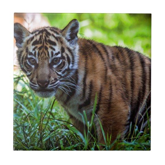 MieteSumatran Tiger CUB Kleine Quadratische Fliese