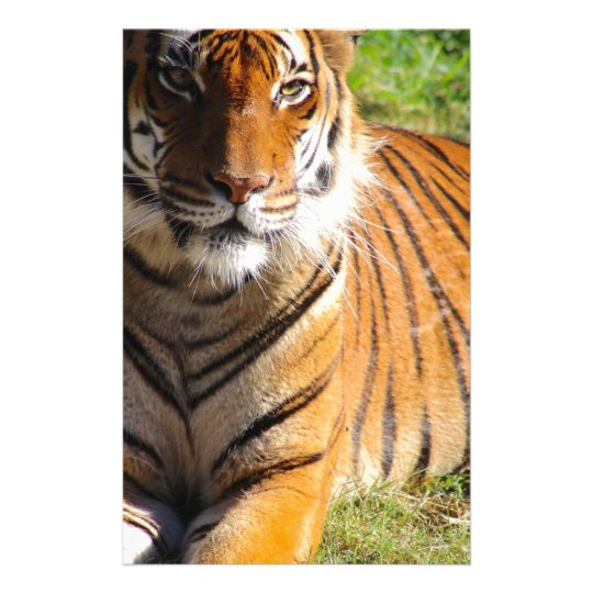 Mietmalaiischer Tiger Briefpapier