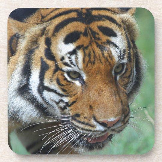 Mietmalaysische Tiger-Nahaufnahme Getränkeuntersetzer