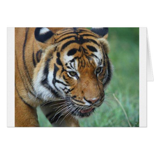 Mietmalaysische Tiger-Nahaufnahme Grußkarte