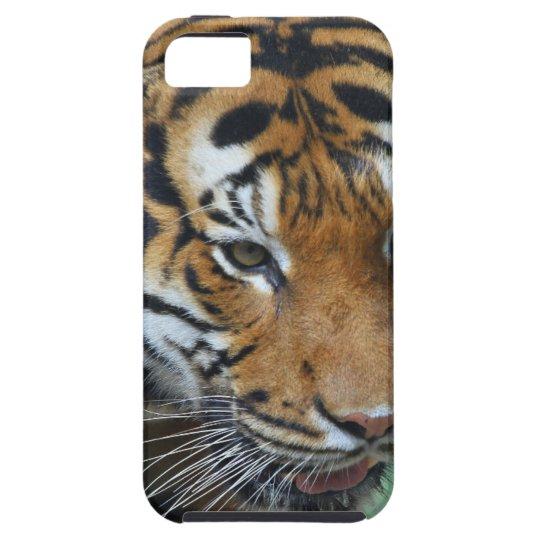 Mietmalaysische Tiger-Nahaufnahme Hülle Fürs iPhone 5