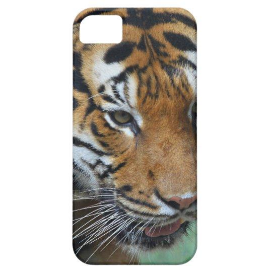 Mietmalaysische Tiger-Nahaufnahme iPhone 5 Etui