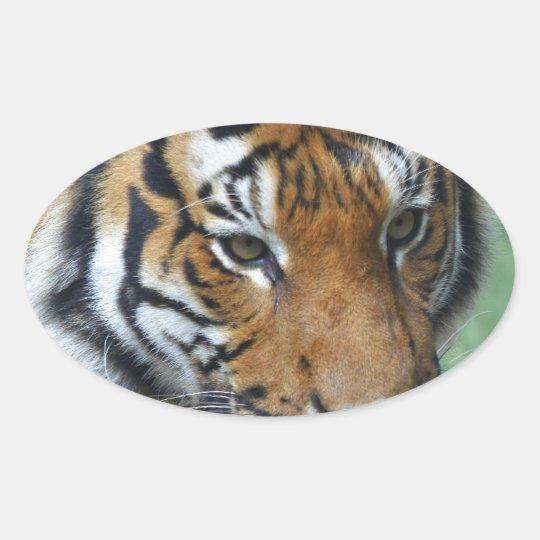 Mietmalaysische Tiger-Nahaufnahme Ovaler Aufkleber