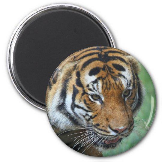 Mietmalaysische Tiger-Nahaufnahme Runder Magnet 5,1 Cm