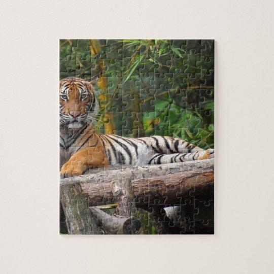 Mietmalaysischer Tiger, der auf Klotz Lounging ist