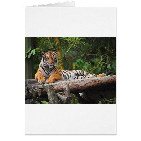 Mietmalaysischer Tiger, der auf Klotz Lounging ist Grußkarte