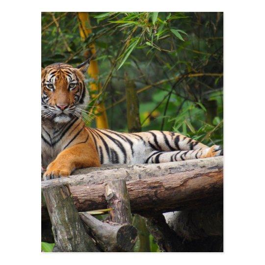 Mietmalaysischer Tiger, der auf Klotz Lounging ist Postkarte