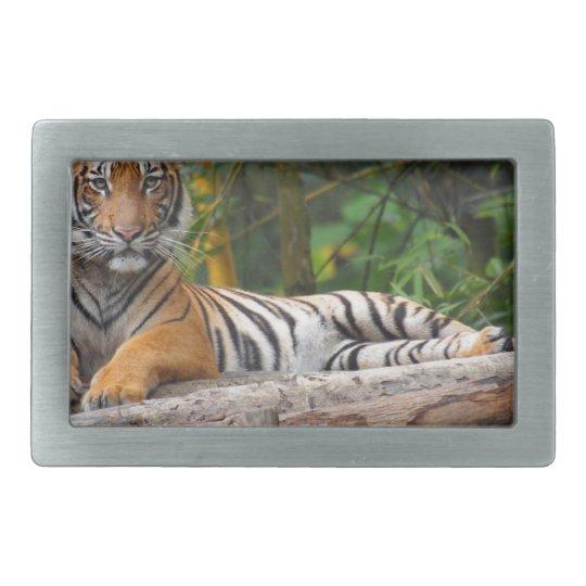 Mietmalaysischer Tiger, der auf Klotz Lounging ist Rechteckige Gürtelschnallen