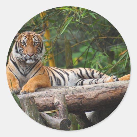 Mietmalaysischer Tiger, der auf Klotz Lounging ist Runder Aufkleber