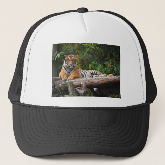 Mietmalaysischer Tiger, der auf Klotz Lounging ist Trucker Mützen