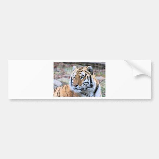 Mietstoic-königlicher bengalischer Tiger Autoaufkleber
