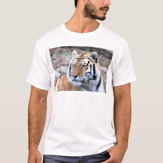 Mietstoic-königlicher bengalischer Tiger T-Shirt