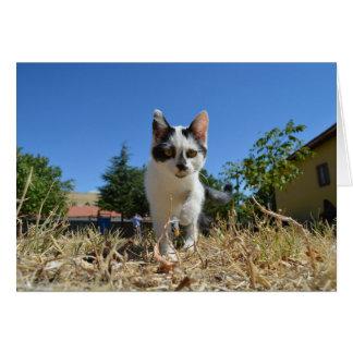 Miezekatze-Katzen-Abenteuer Grußkarte